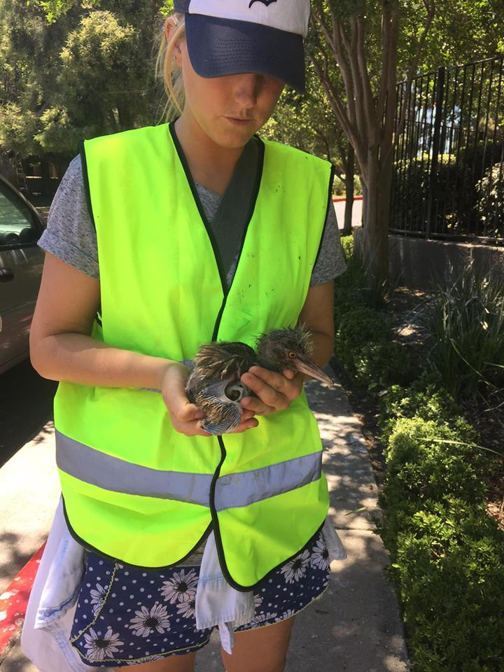 Rescuer with baby heron